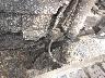 ISUZU ELF DUMP TRUCK 1992 Image 10