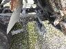 ISUZU ELF DUMP TRUCK 2001 Image 25